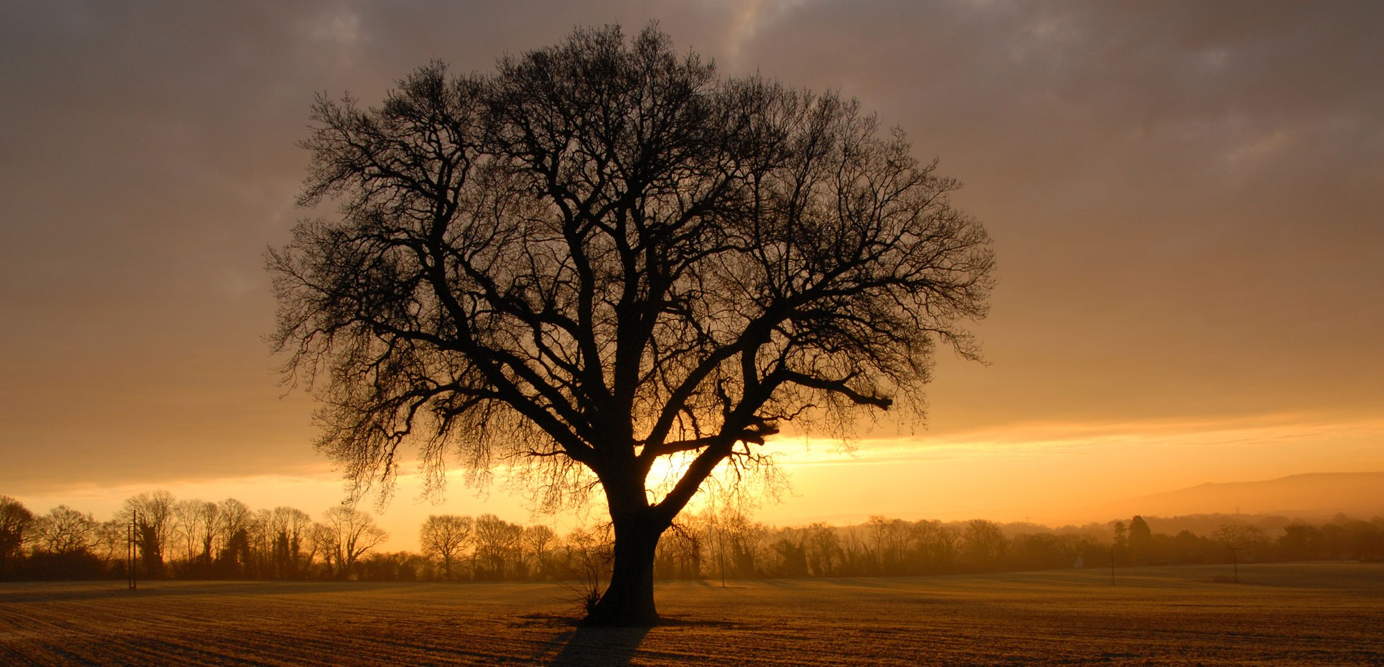 Our oak tree at sunrise